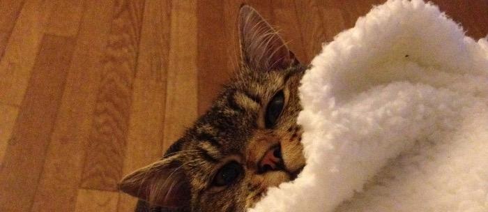 8 août: Journée internationale des chats
