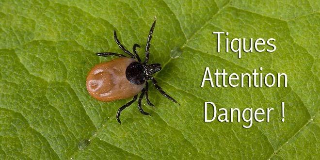Plaquette d'information de Lyme sans frontières
